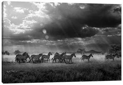 Zebra's Paradise Canvas Art Print
