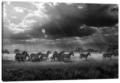 Zebra's Paradise Canvas Print #OXM1089