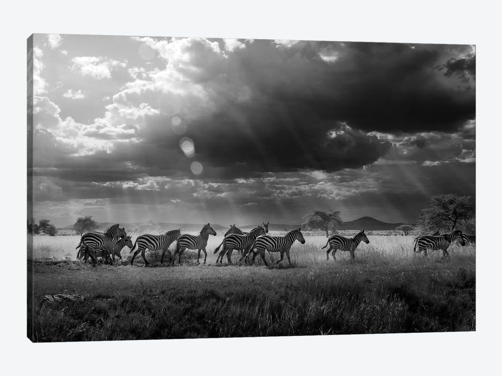 Zebra's Paradise by Alberto Ghizzi Panizza 1-piece Canvas Wall Art