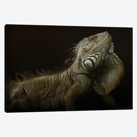 Iguana Profile Canvas Print #OXM1090} by Aleksandar Milosavljević Canvas Art Print