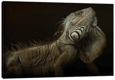 Iguana Profile Canvas Art Print