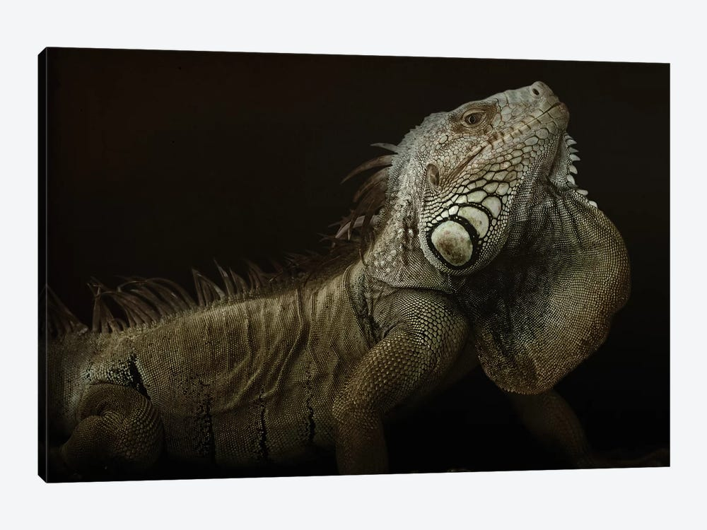 Iguana Profile by Aleksandar Milosavljević 1-piece Canvas Wall Art