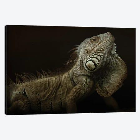 Iguana Profile Canvas Print #OXM1090} by Aleksandar Milosavljević Canvas Art Print