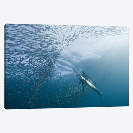 Hunter And The Hunted Canvas Print #OXM1099} by Alexander Safonov Canvas Print