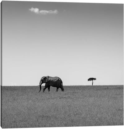 Elephant And The Friendly Cloud... Canvas Art Print