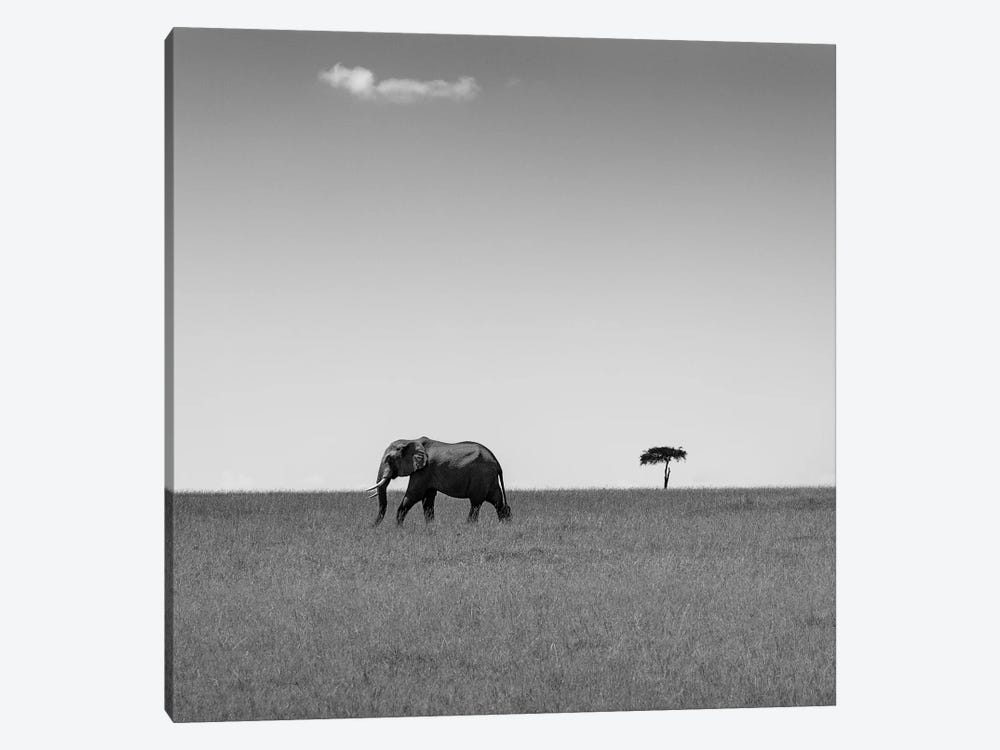 Elephant And The Friendly Cloud... by Ali Khataw 1-piece Canvas Wall Art