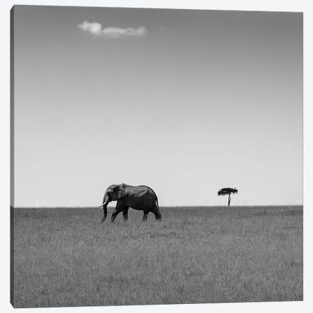 Elephant And The Friendly Cloud... Canvas Print #OXM1108} by Ali Khataw Canvas Art Print