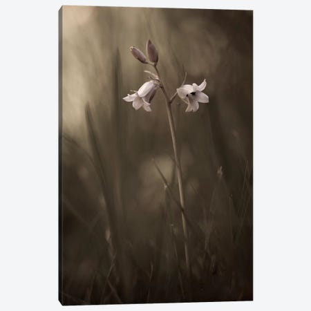 A Small Flower On The Ground Canvas Print #OXM1111} by Allan Wallberg Canvas Art