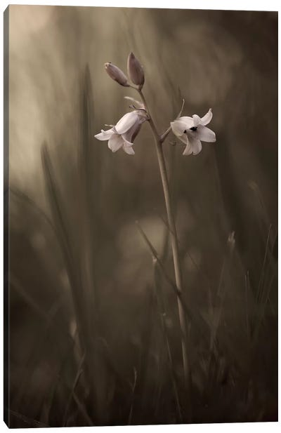A Small Flower On The Ground Canvas Art Print