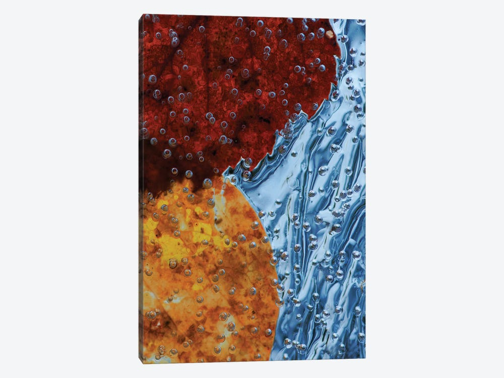 Leaves Frozen In Ice by Allan Wallberg 1-piece Canvas Art Print