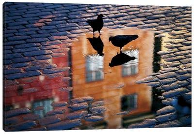 Pigeons Canvas Print #OXM1113