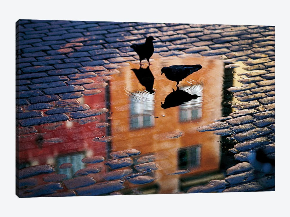 Pigeons 1-piece Canvas Artwork