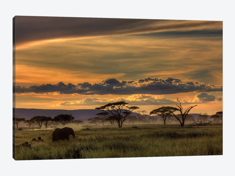 Africa by Amnon Eichelberg 1-piece Canvas Wall Art