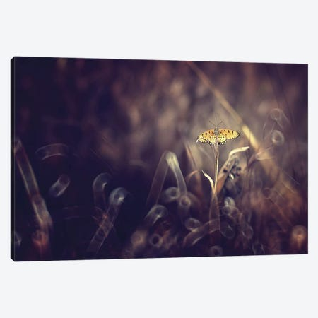 Dark Violet Canvas Print #OXM113} by Donald Jusa Canvas Wall Art