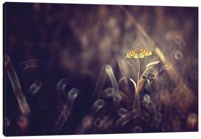 Dark Violet Canvas Print #OXM113