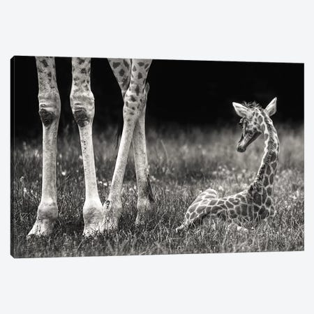 Well Protected Canvas Print #OXM1144} by Andreas Feldtkeller Canvas Art