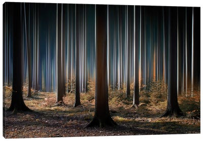 Mystic Wood Canvas Print #OXM114