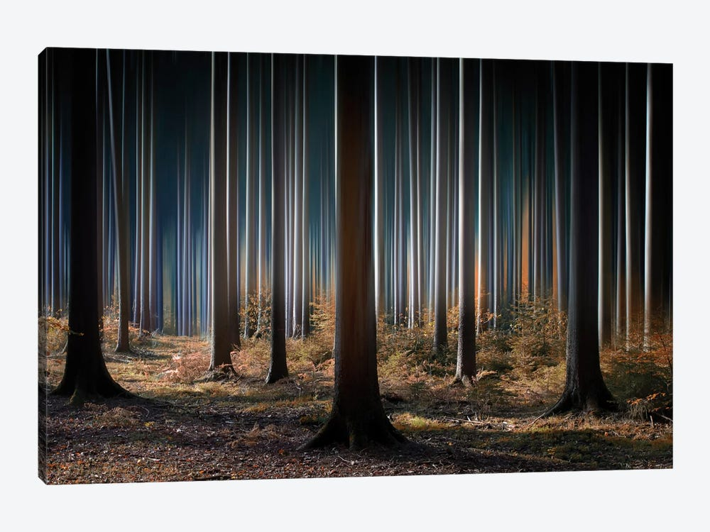 Mystic Wood by Carsten Meyerdierks 1-piece Canvas Art Print
