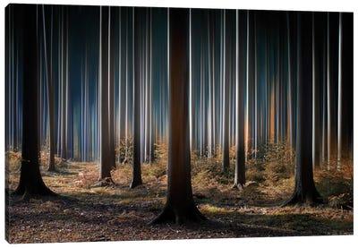 Mystic Wood Canvas Art Print