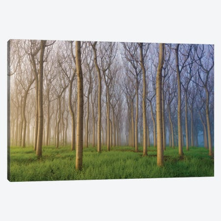 Morning Of The Forest Canvas Print #OXM1155} by Andy Chan Art Print
