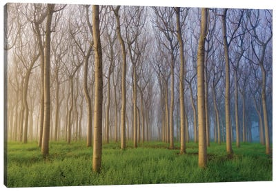 Morning Of The Forest Canvas Art Print
