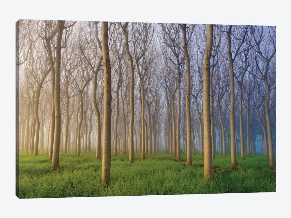 Morning Of The Forest by Andy Chan 1-piece Canvas Art