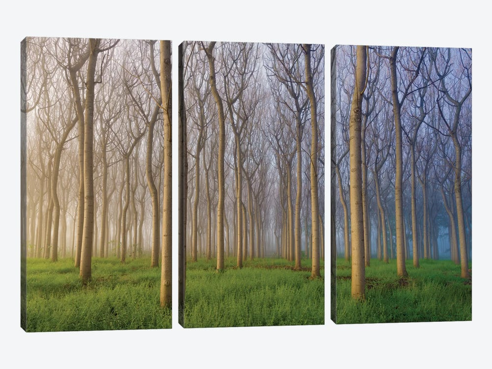 Morning Of The Forest by Andy Chan 3-piece Canvas Art