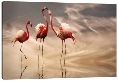 Fighting... Canvas Art Print