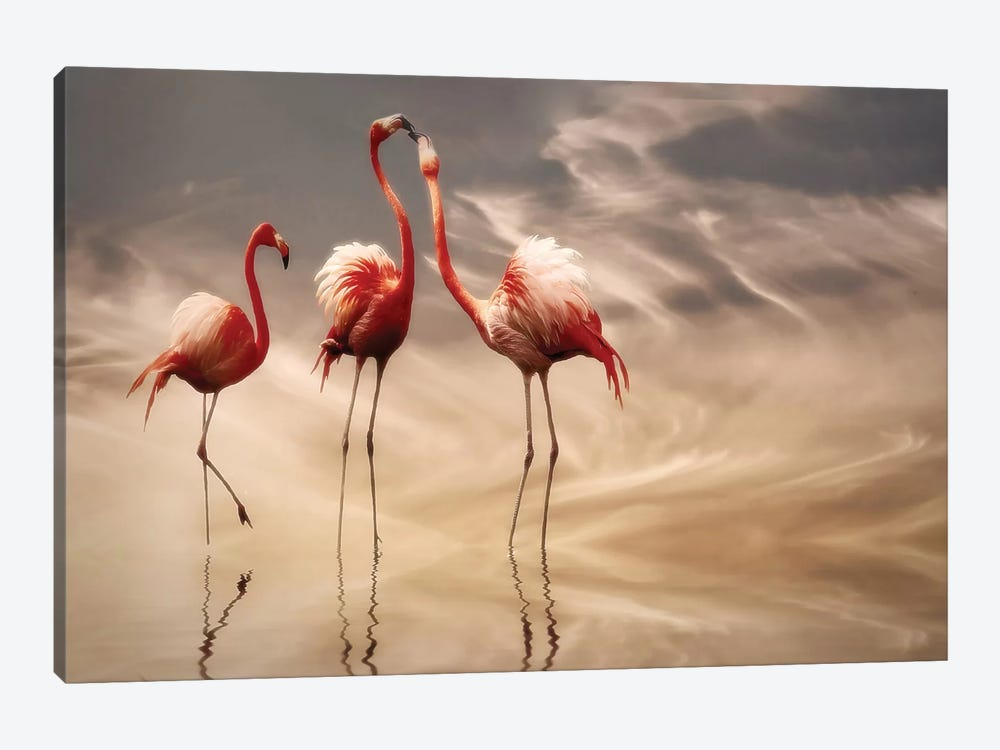Fighting... by Anna Cseresnjes 1-piece Canvas Wall Art