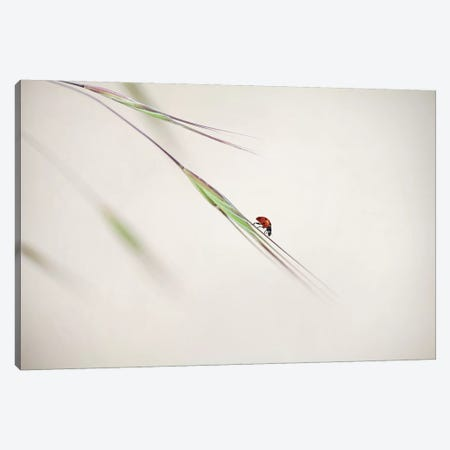 Spotted Beauty Canvas Print #OXM1166} by Anna Cseresnjes Canvas Art