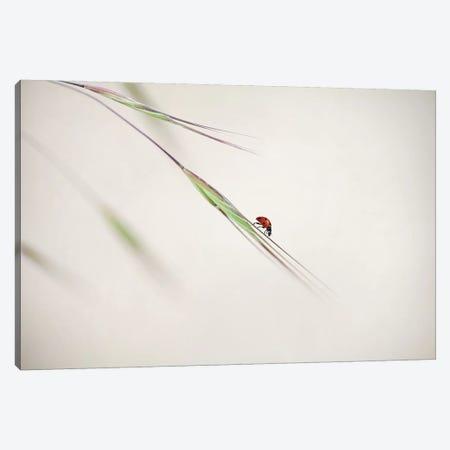 Spotted Beauty Canvas Print #OXM1166} by Anna Cseresnjes Canvas Art