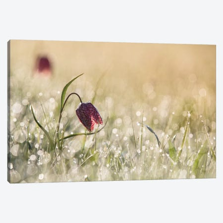 Morning Dew Canvas Print #OXM1182} by Anton van Dongen Art Print