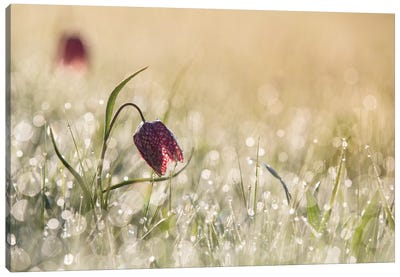 Morning Dew Canvas Art Print
