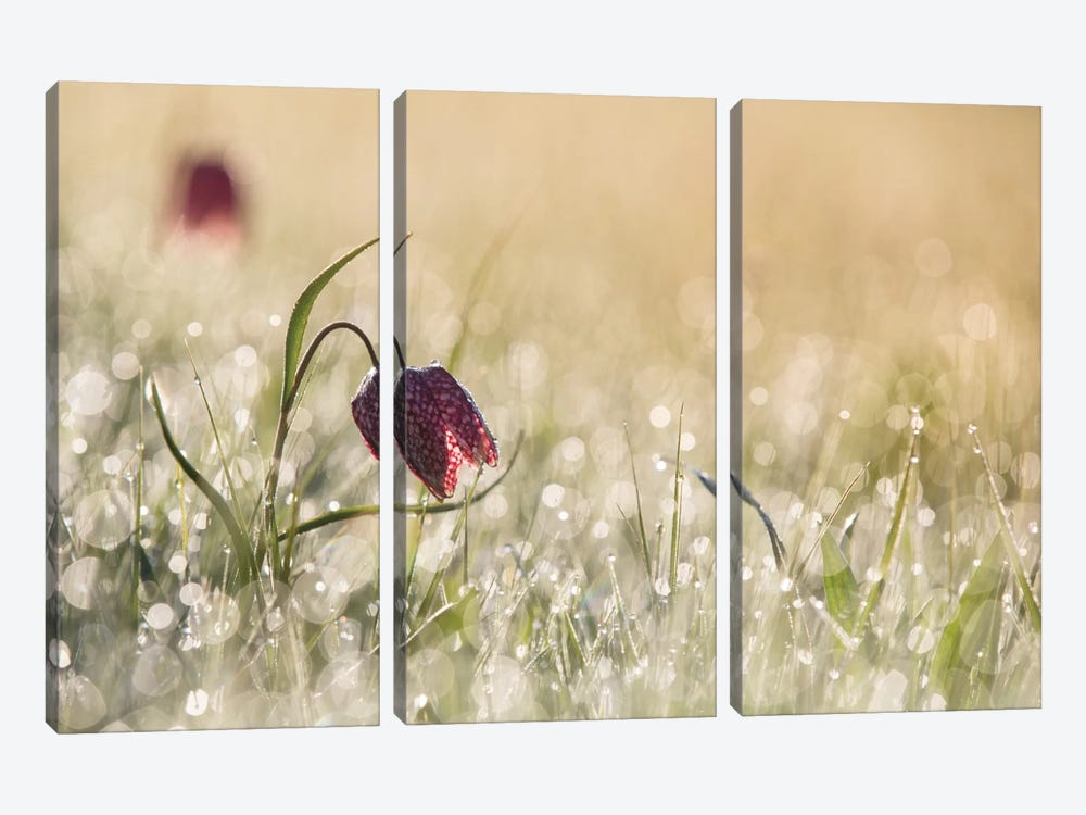 Morning Dew 3-piece Canvas Art