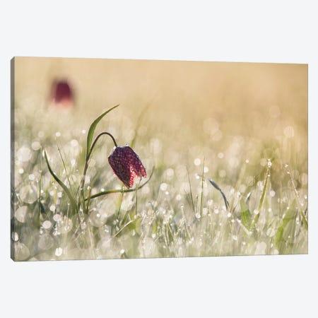 Morning Dew Canvas Print #OXM1182} by Anton van Dongen Art Print