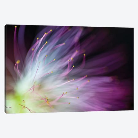 The Will-O-The-Wisp Canvas Print #OXM1199} by Art Lionse Canvas Artwork