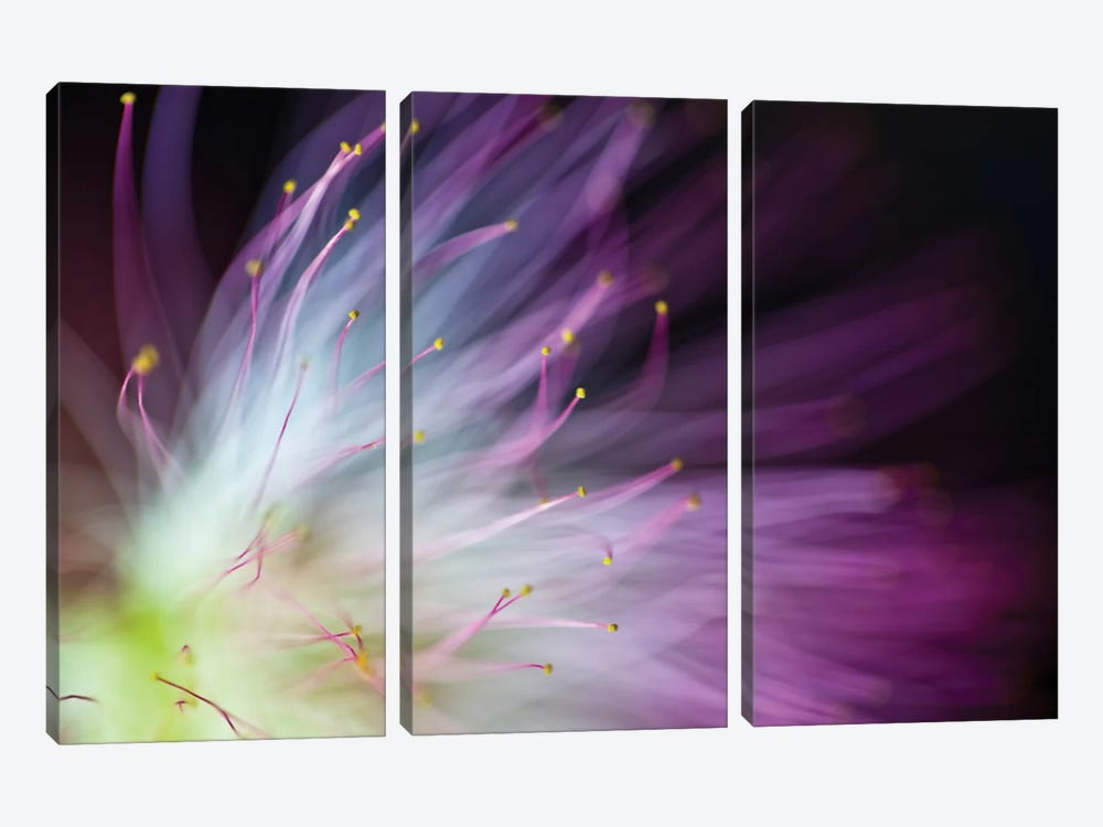 The Will-O-The-Wisp by Art Lionse 3-piece Canvas Wall Art