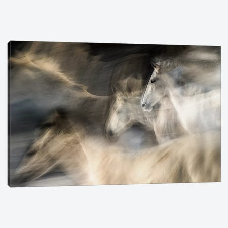 In Motion Canvas Print #OXM119} by Milan Malovrh Canvas Wall Art