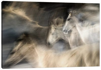 In Motion Canvas Art Print