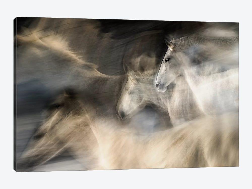In Motion by Milan Malovrh 1-piece Canvas Art
