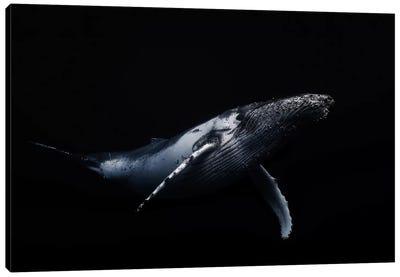 Black & Whale I Canvas Print #OXM1208