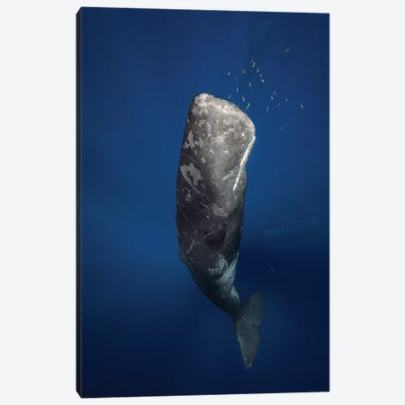 Candle Sperm Whale Canvas Print #OXM1210} by Barathieu Gabriel Art Print