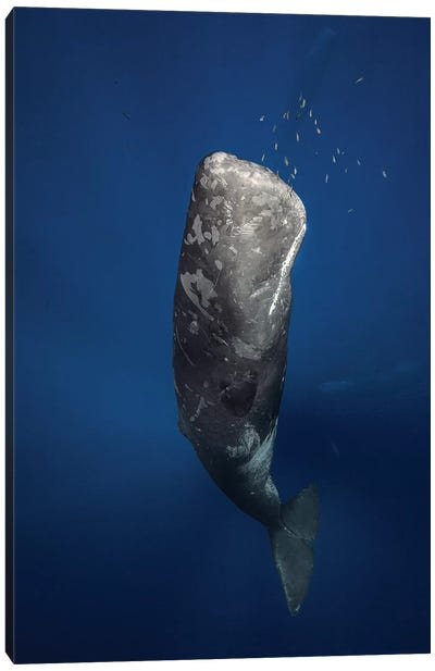 Candle Sperm Whale Canvas Print #OXM1210