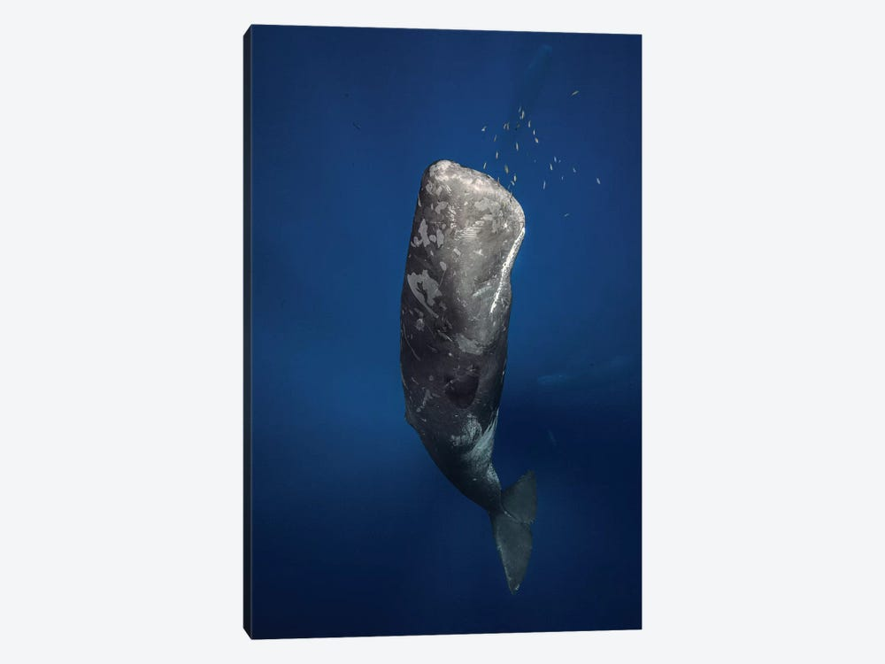 Candle Sperm Whale by Barathieu Gabriel 1-piece Canvas Art Print