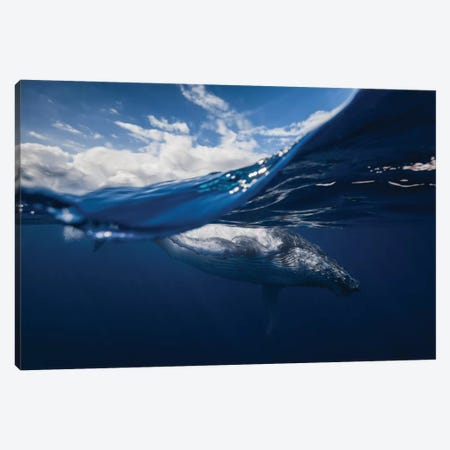 Humpback Whale And The Sky Canvas Print #OXM1213} by Barathieu Gabriel Canvas Print