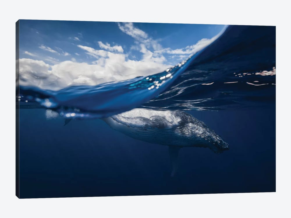 Humpback Whale And The Sky by Barathieu Gabriel 1-piece Canvas Art