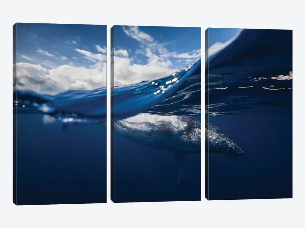 Humpback Whale And The Sky by Barathieu Gabriel 3-piece Canvas Wall Art
