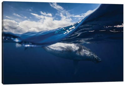 Humpback Whale And The Sky Canvas Art Print