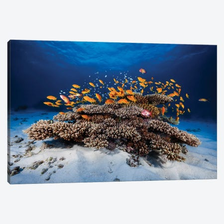 Marine Life Canvas Print #OXM1215} by Barathieu Gabriel Canvas Wall Art