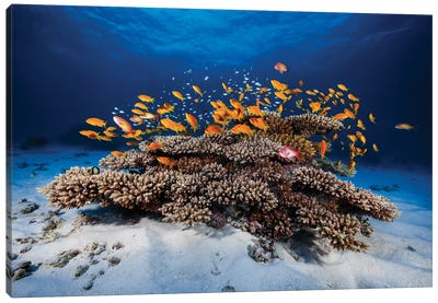 Marine Life Canvas Art Print